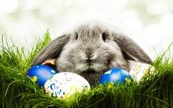 Easter bunny, church