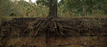 Tree-Roots-and-soil-Forestkeepers.net_