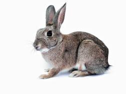 rabbit-740621_1920